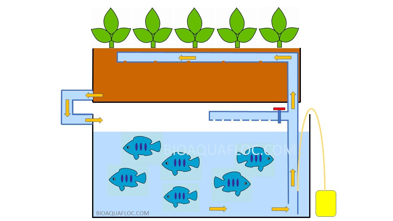 Dibujo ilustrativo sobre sistema acuapónico con sistema air lift