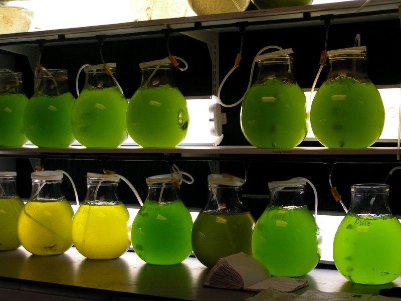 cursos en acuicultura camarón biofloc