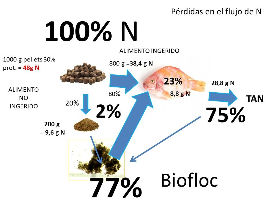 Flujo nitrógeno biofloc
