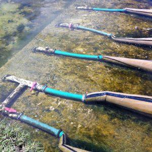 Tipos de cultivos acuícolas