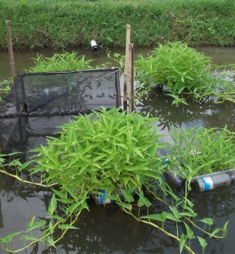 Acuaponia ambiental
