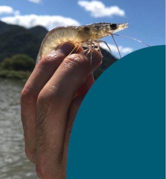Curso avanzado acuicultura simbiotica