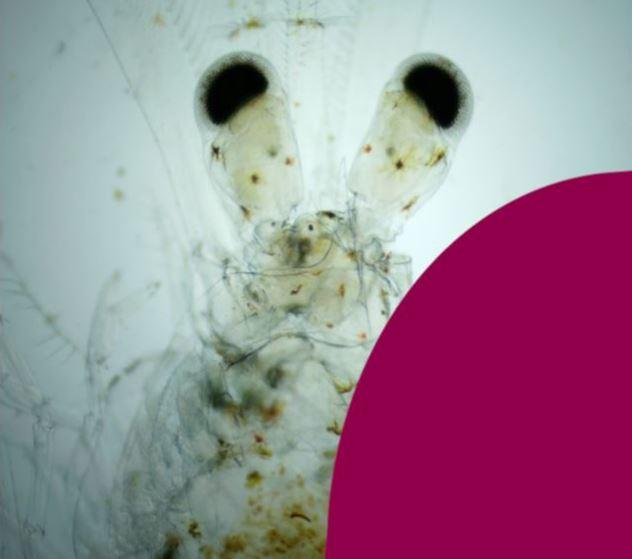 Curso de reproducción de camarón